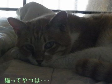 20110629_ren.jpg