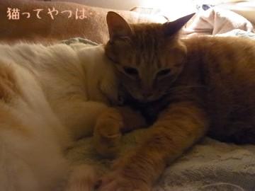 20110708_gintayui.jpg