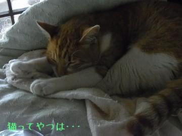 20110725_ren.jpg