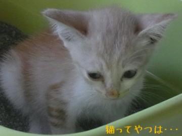 20110811_takeru2.jpg