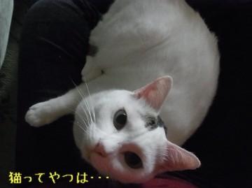 20110814_rui.jpg