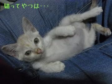 20110823_taekru2.jpg