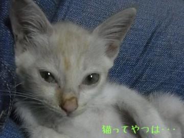 20110823_takeru1.jpg