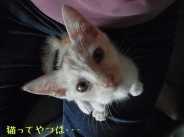 20110902_takeru.jpg