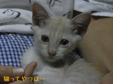 20110904_takeru.jpg