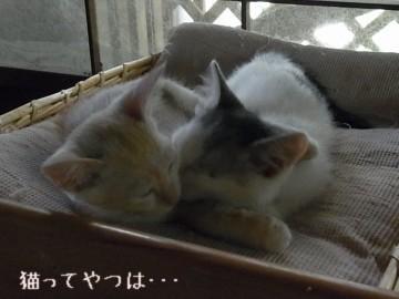 20110912_takeruhiro2.jpg