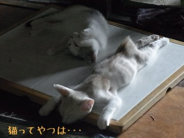 20110915_takeruhiro.jpg