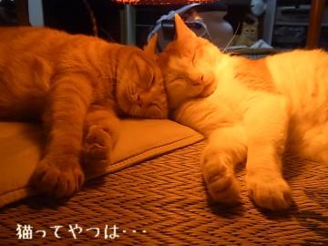 20110925_gintayui.jpg