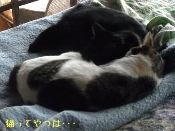 20111007_ryouchoko.jpg