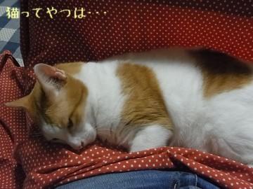 20111013_ginta.jpg