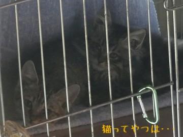 20111129_amane's_kittens.jpg