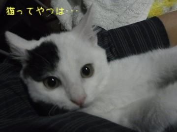 20111129_tooma.jpg