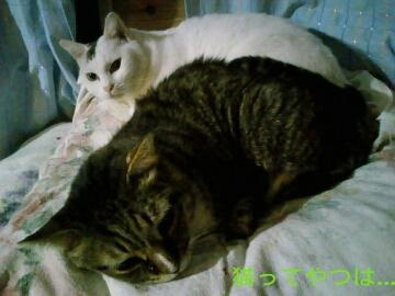 20120922_tsubasarui.jpg