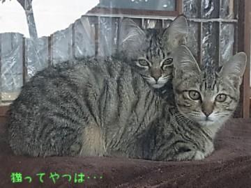 20120126_nagisahonoka.jpg