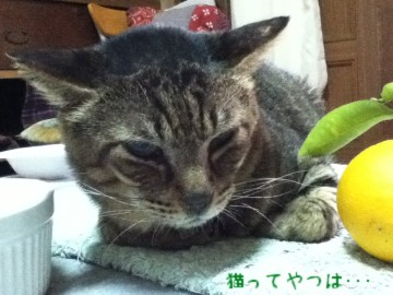 20120301_yukichi.jpg