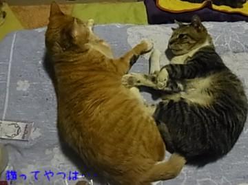 20120314_tsubasa_taiyou.jpg