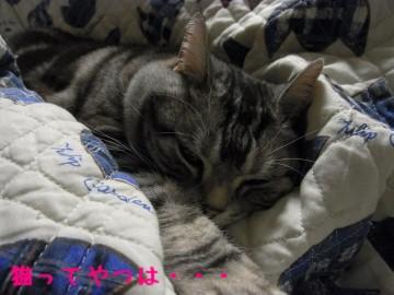 2010_kiri_1.jpg