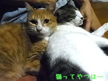 20120908_taiyou.jpg