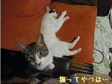 20131217_tohmaminato_1.jpg