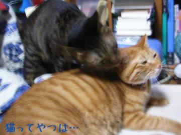 20061217_kentoyui.jpg