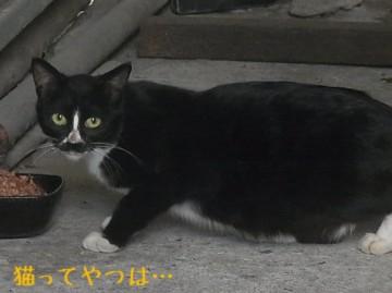 20111023_nanako.jpg