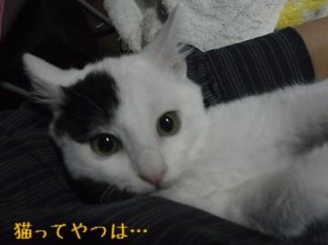 20111129_tohma.jpg