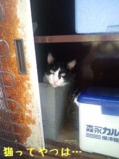 20120913_nasubi_1.jpg