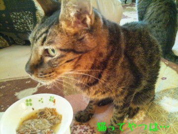 20141115_kento.jpg