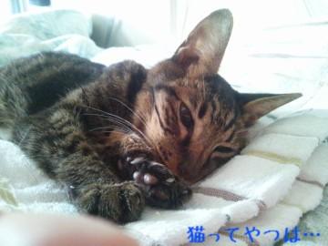 20141121_kento.jpg