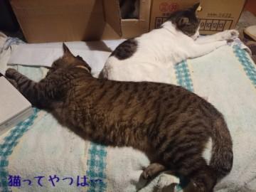 20150522_ryoumutsu.jpg