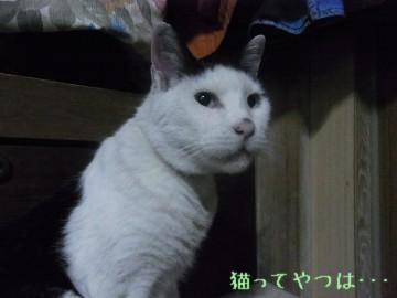 20100412_horu.jpg