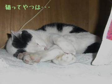 20110121_horu.jpg