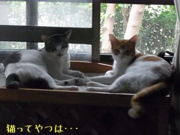 20110929_ryoumoosuke.jpg