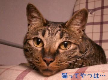 20050617_kento.jpg