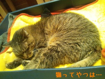 20140117_hayato1.jpg